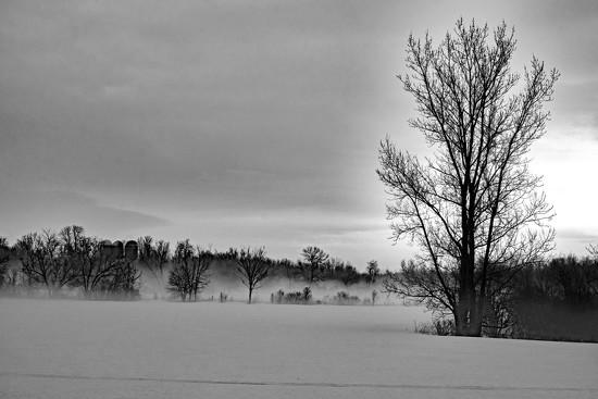 Foggy Morning by farmreporter