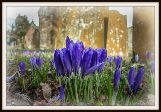 A bloomin' graveyard! by ellida