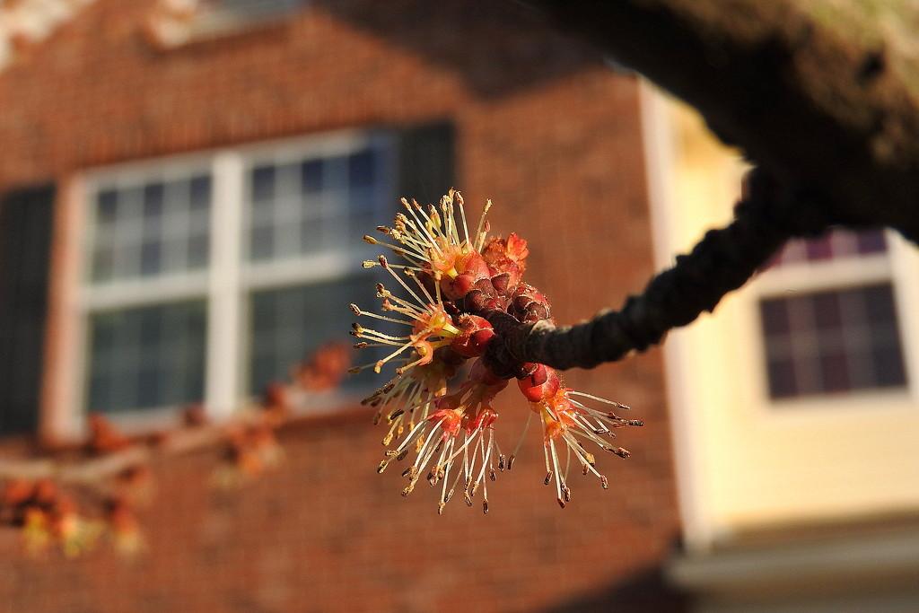 My tree is blooming! by homeschoolmom