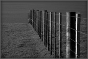 24th Feb 2018 - The fence