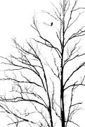19th Feb 2018 - bird's eye view