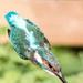Kingfisher-one I forgot!!