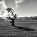 The Burning Tree..