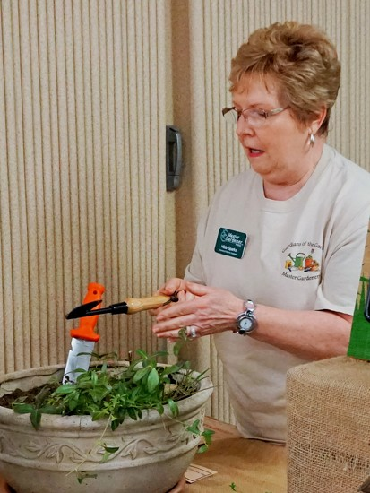 Demonstrating the best weeder ever by tunia