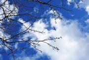 25th Feb 2018 - 57. Hello Blue Sky