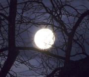 22nd Feb 2018 - Full Moon in the Trees