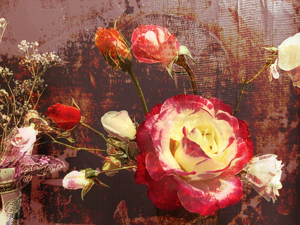 Roses from our garden by kathyboyles
