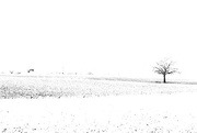 26th Feb 2018 - Winter landscape