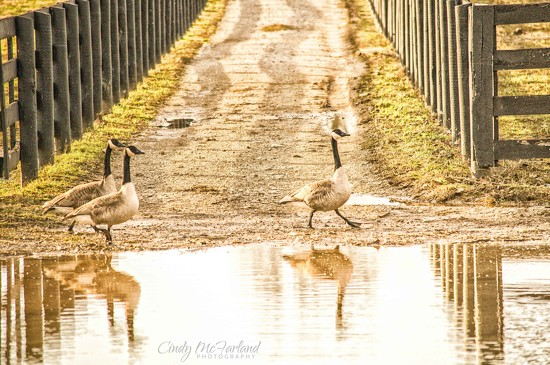 Walk This Way... by cindymc