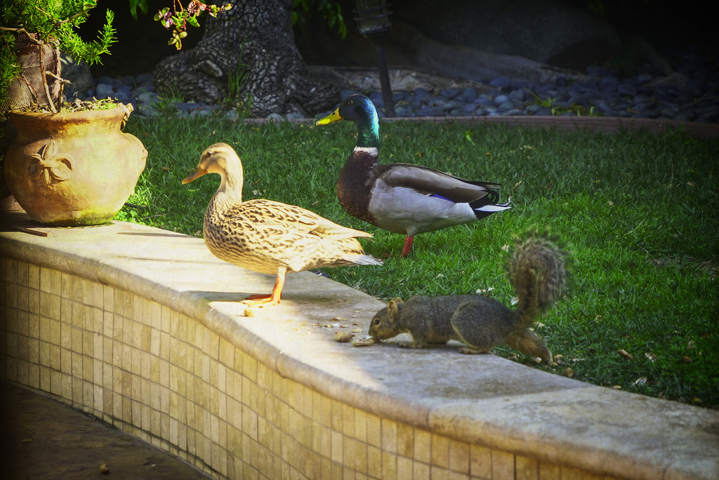A Typical Morning in The Peaceable Kingdom by Weezilou