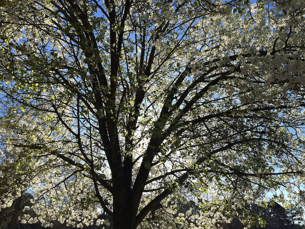 Spring sunthing trought the tree by homeschoolmom