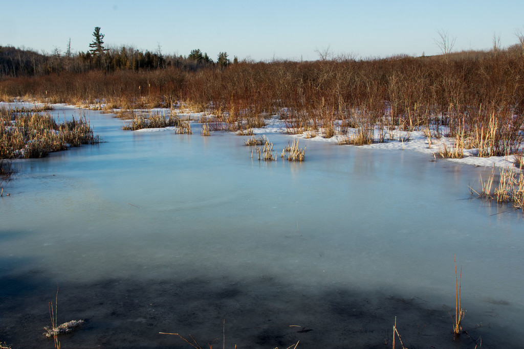 Swamp Uncovered by farmreporter
