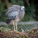 Grey Heron by yorkshirekiwi