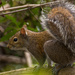 Stop Action Squirrel! by rickster549