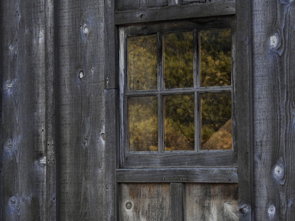 in the window by amyk
