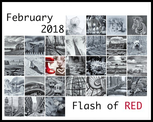 Flash of Red February 2018 by pamknowler