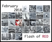 28th Feb 2018 - Flash of Red February 2018