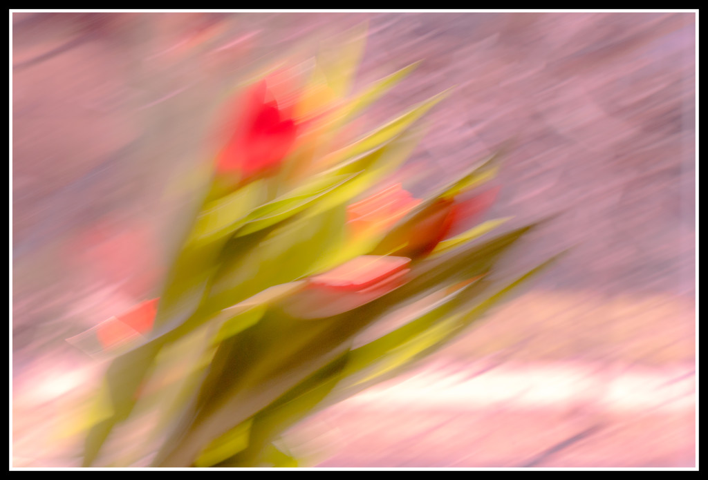 tulip bouquet abstract by jernst1779