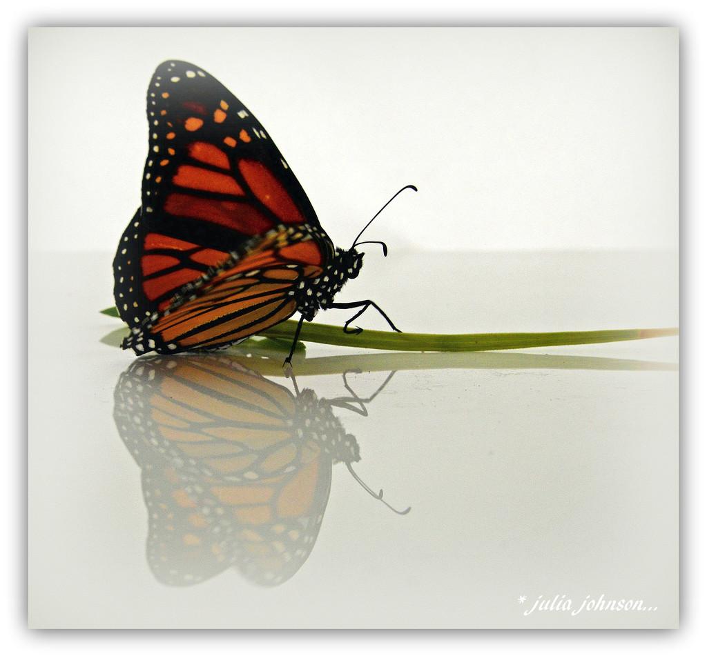 Visiting Monarch... by julzmaioro