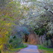 Path in Spring at Magnolia Gardens by congaree