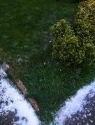 1st Mar 2018 - Green, Green Grass of Home