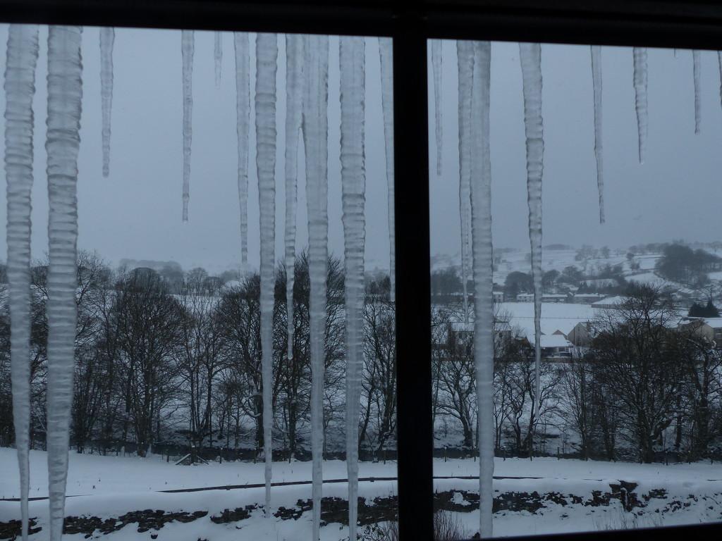 View through my bedroom window by shirleybankfarm