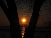 26th Feb 2018 - Sun Through the Trees
