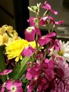 26th Feb 2018 - Mystery flower