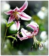 1st Mar 2018 -  Mt Lofty Botanical Gardens