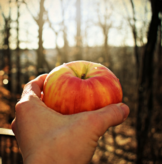 Surely You May Eat of This Fruit by alophoto