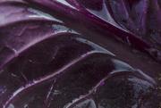 3rd Mar 2018 - Purple - Cabbage