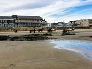 2nd Mar 2018 - Horses on the Beach