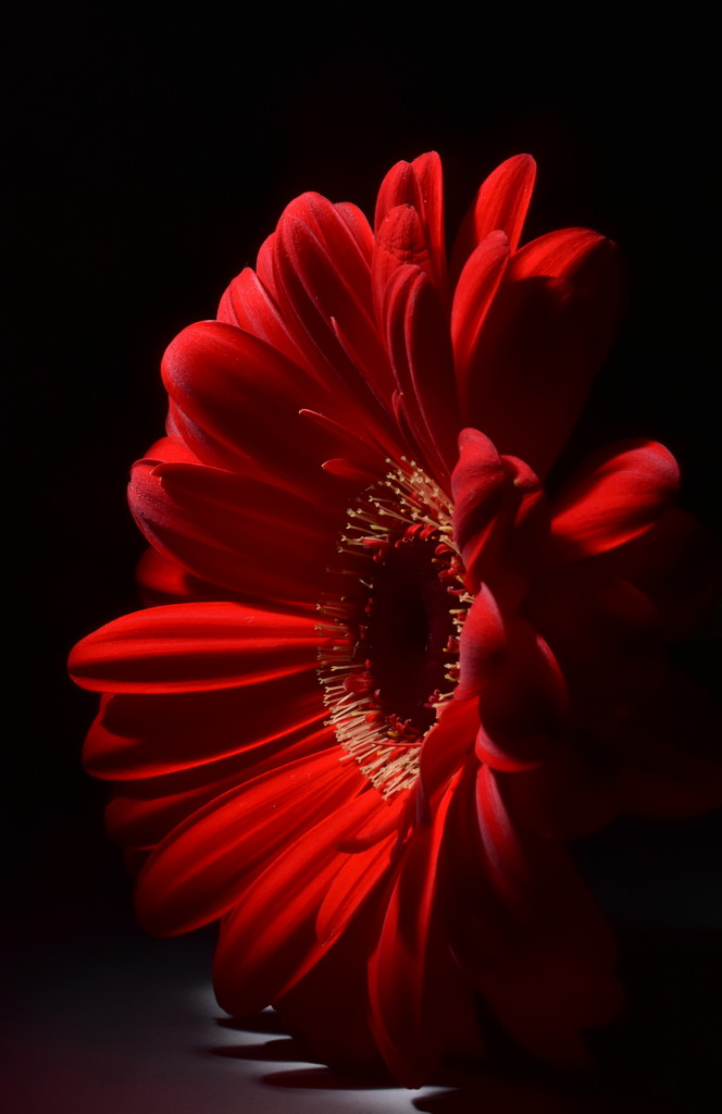 99 44/100 % Pure Red by jayberg