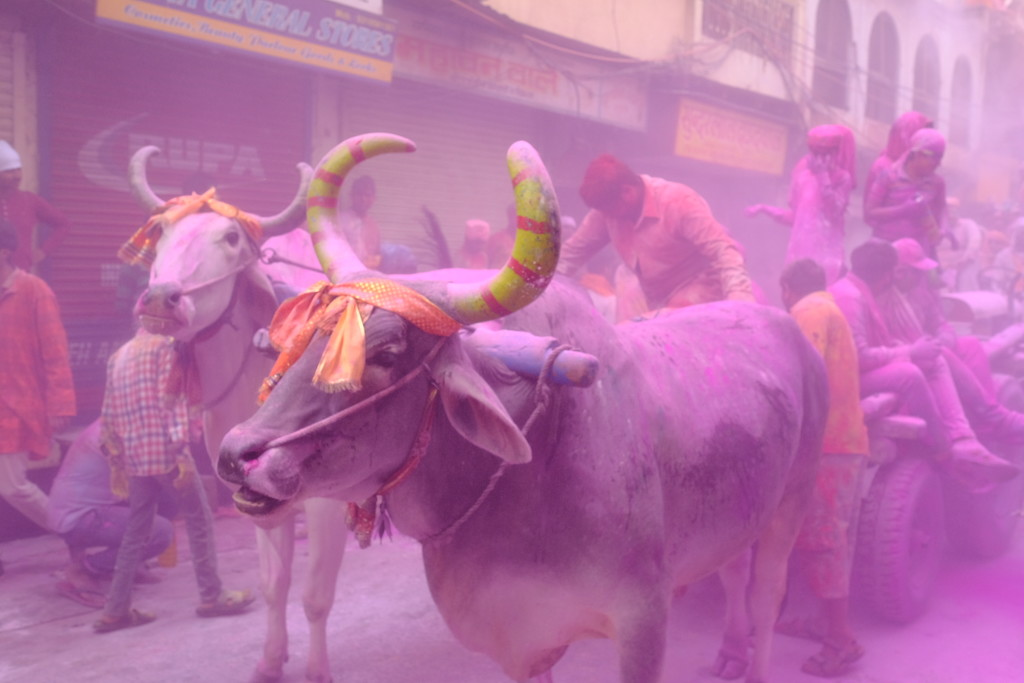 Holi celebrations, Mathura by stefanotrezzi