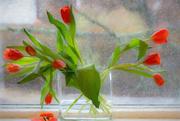 3rd Mar 2018 - tulips in the window