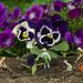 Garden Crew by gaylewood
