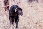 2nd Mar 2018 - calving time