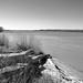 Driftwood, Mississippi River