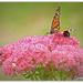 Hiding bumble bee by julzmaioro