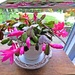 Easter Cactus Box , by beryl