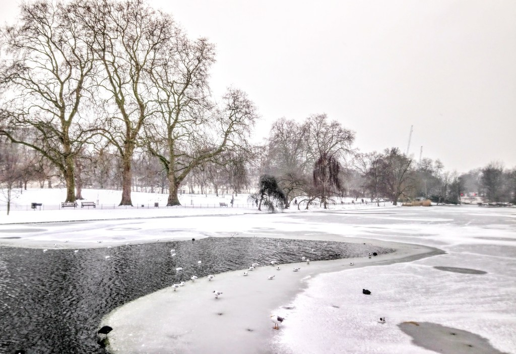 Birds on the frozen lake in St James's Park by boxplayer