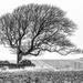 Windswept by rjb71