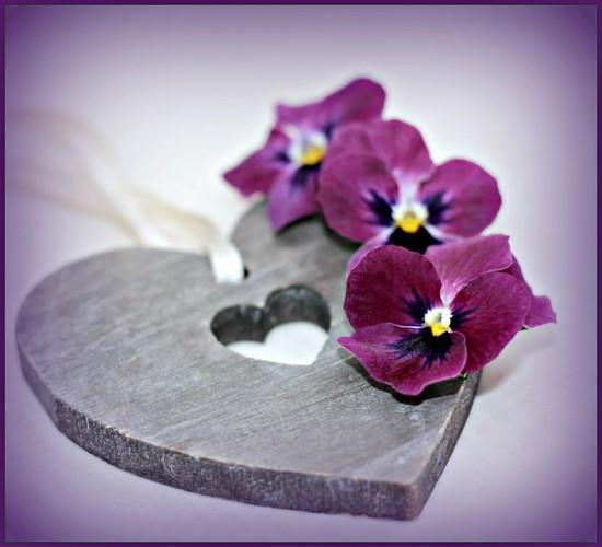 Violet Violas. by wendyfrost