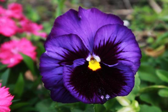 Purple by ingrid01