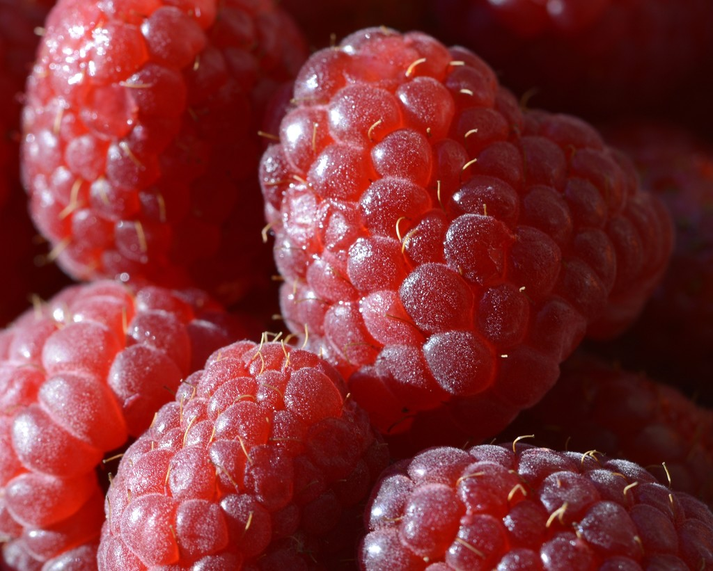 Red Raspberries_DSC8406 by merrelyn