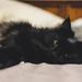 Bed Buddy by vera365
