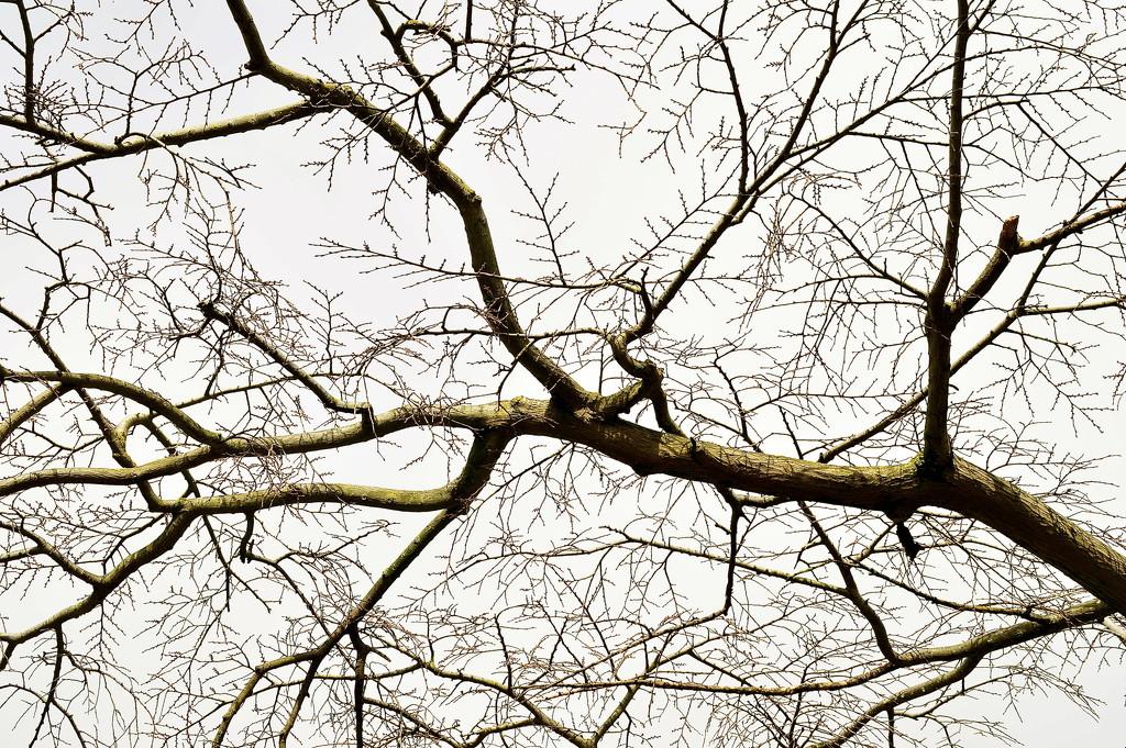 Branch Network by redandwhite