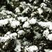 2986-0305 Overnight Snow