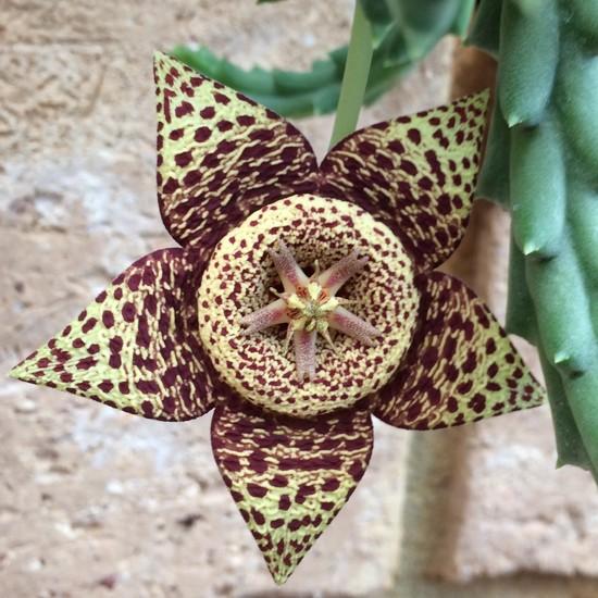 It's Flowered! by narayani