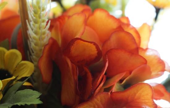 Orange flowers by mittens